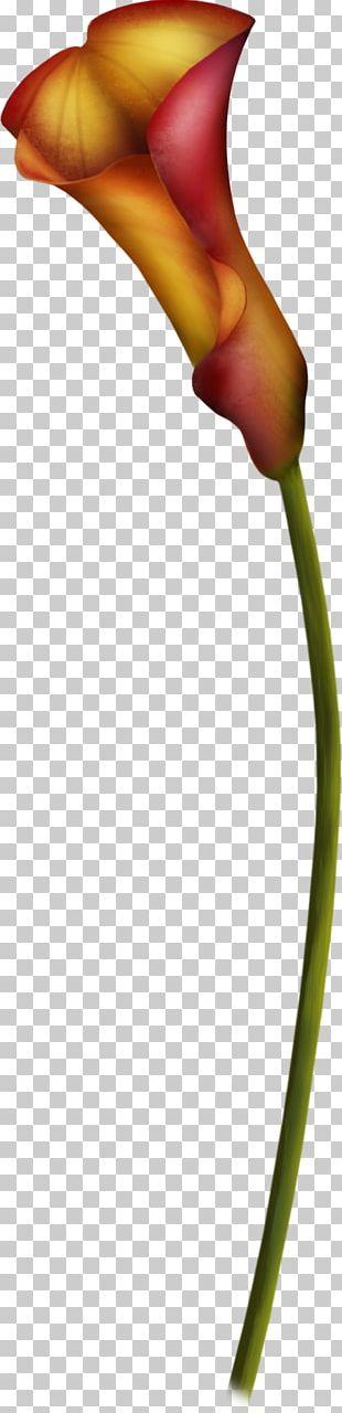 Bud Plant Stem Close-up PNG