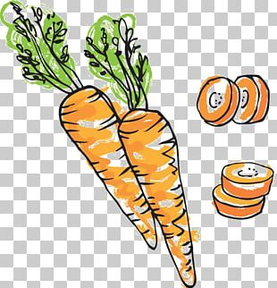 Carrot Cake Drawing Illustration PNG