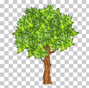 Branch Fruit Tree Drawing PNG