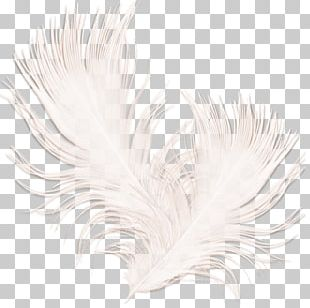 White Feather Black PNG