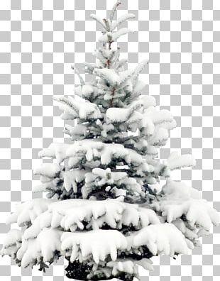 Snow Tree Pine Christmas PNG
