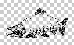 Sockeye Salmon Chinook Salmon Pink Salmon Chum Salmon PNG