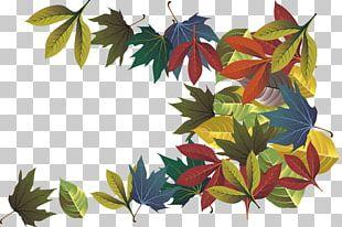 Autumn Leaf Deciduous PNG