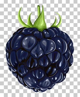 Blackberry Fruit PNG