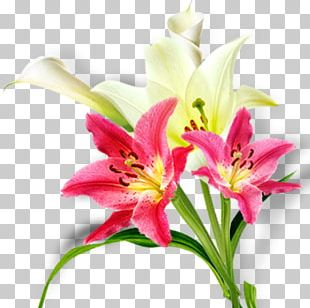 Floral Design Lilium Cut Flowers Flower Bouquet Daylily PNG