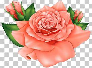 Rose Flower Orange PNG