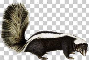 Rodent Animal Fauna Fur Wildlife PNG