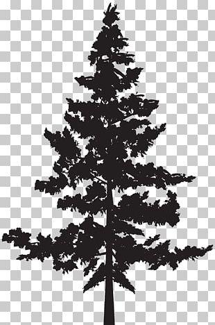 Western Red-cedar Tree Evergreen Blue Spruce PNG