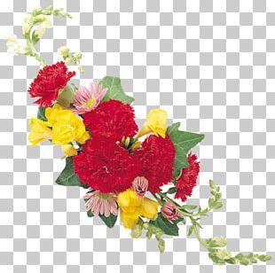 Floral Design Carnation Cut Flowers Rose PNG