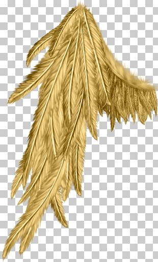 Angel Wing Angel Wing PNG