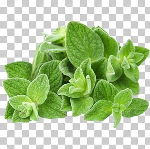 Organic Food Oregano Essential Oil Herb PNG