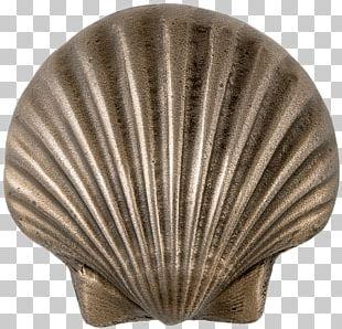 Metal Scalloped Seashell PNG