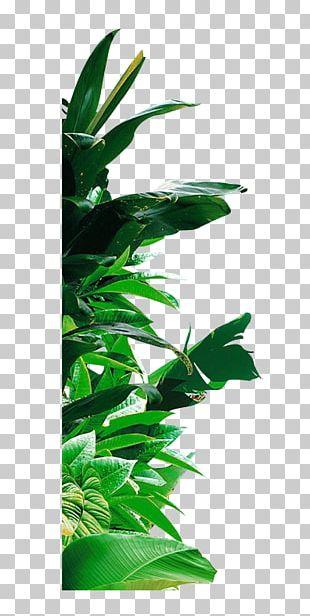 Banana Leaf Banana Leaf PNG