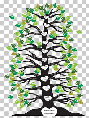Family Tree Branch Root PNG