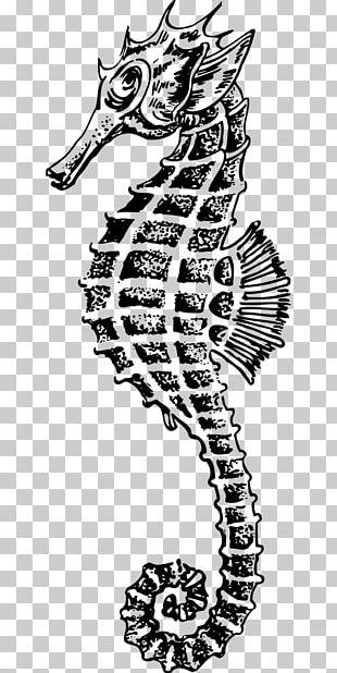 Seahorse Drawing PNG