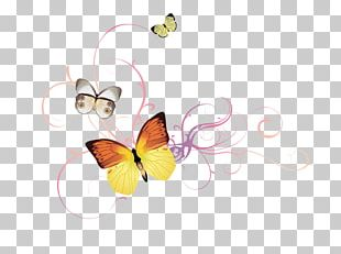 Butterfly Drawing Flower PNG