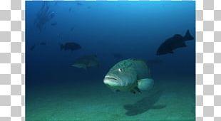 Marine Biology Sea Underwater Marine Mammal PNG