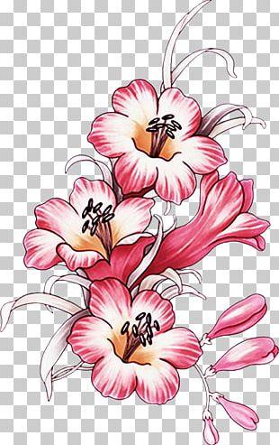 Flower Floral Design Frames Petal Plant PNG