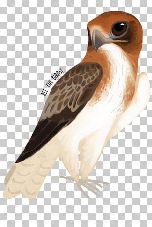 Owl Fauna Hawk Beak Feather PNG