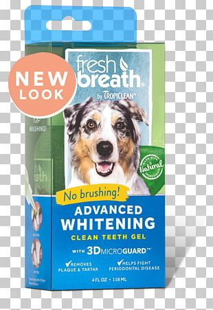 Dog Teeth Cleaning Tooth Whitening Cat Oral Hygiene PNG