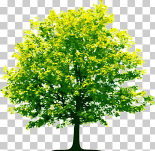 Tree Scalable Graphics Computer File PNG