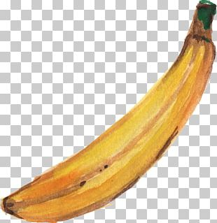 Banana Watercolor Painting Paper PNG