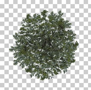 Shrub Leaf Branching PNG