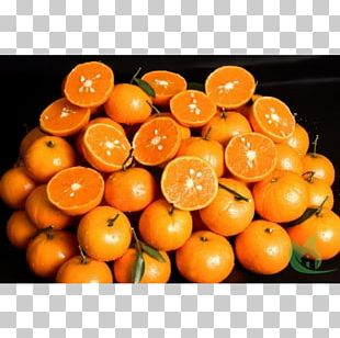 Clementine Tangerine Bitter Orange Mandarin Orange Rangpur PNG