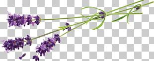 Lavender Flower Stock Photography Desktop Plant PNG