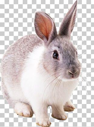 Rabbit PNG
