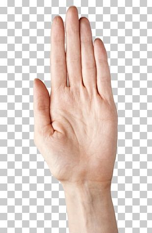 Thumb Nail Upper Limb Hand Model PNG