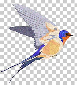 Barn Swallow PNG