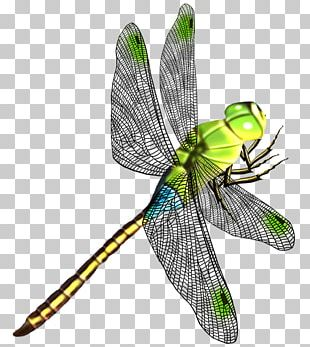 Dragonfly Butterfly Insect Wing PNG