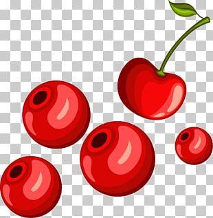 Cherry Euclidean PNG