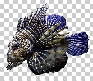 Cobalt Blue Fish PNG