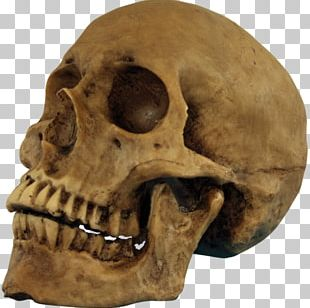 Skull Halloween Human Skeleton Party PNG