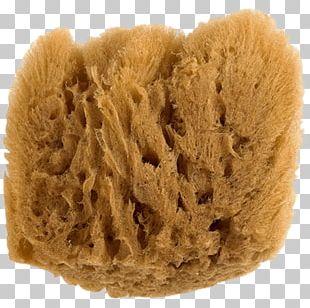 Natural Sponge PNG