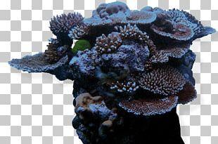 Great Barrier Reef John Pennekamp Coral Reef State Park Caribbean PNG
