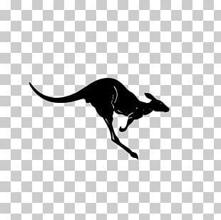 Kangaroo Silhouette PNG