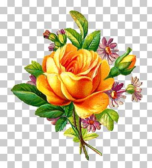 Flower Rose Yellow Antique PNG