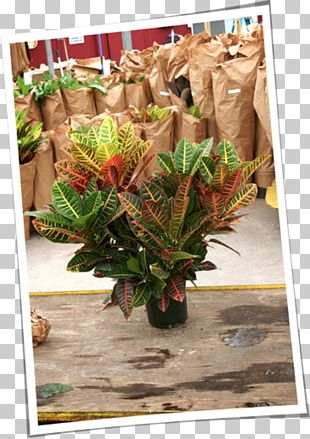 Flower Floral Design Floristry Plant Leaf PNG