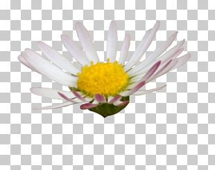 Digital Scrapbooking Flower Editing Photography PNG