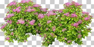 Plant Shrub Tree PNG