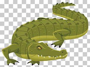 Nile Crocodile Alligator Logo PNG