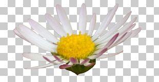 Digital Scrapbooking Photography Flower PNG