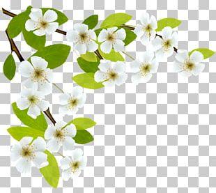 Spring Branch PNG