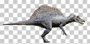 Spinosaurus Tyrannosaurus Velociraptor Giganotosaurus Jurassic Park: Operation Genesis PNG