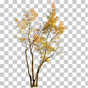 Leaf Plant PNG