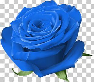 Blue Rose Garden Roses Centifolia Roses Floribunda PNG