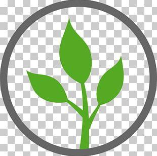 Vegetarian Cuisine Natural Environment Vegetable PNG